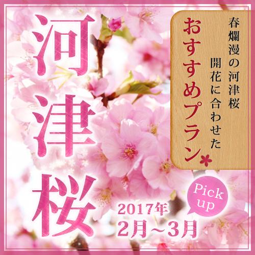 河津桜 おすすめプラン